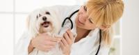 chiens bon santé