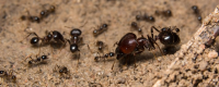 fourmis source futurs médicaments